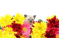 Милый котенок младенца Стоковое Изображение RF