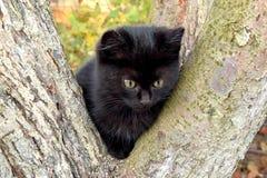 Милый котенок мой герой фотосессии стоковые фото