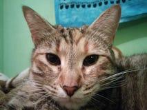 милый котенок наблюдая камеру стоковая фотография