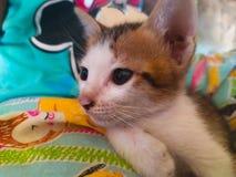 Милый котенок на кровати стоковые изображения rf