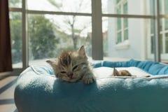 Милый котенок на кровати Стоковое Изображение RF