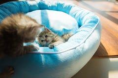 Милый котенок на кровати Стоковые Фото