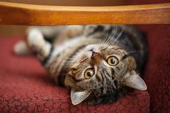 милый котенок немногая Пушистый любимчик удобно установленный для того чтобы спать или играть стоковое фото
