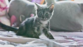 милый котенок немногая стоковое изображение rf