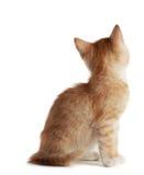 милый котенок немногая Стоковое Фото