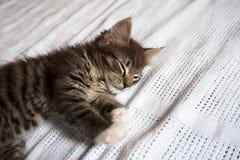 Милый котенок спать на белом одеяле стоковые изображения