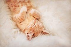 Милый, котенок спящ и усмехающся на одеяле меха Концепция уютное Hyugge и доброе утро стоковые фотографии rf