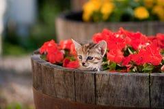милый котенок цветков Стоковое Изображение RF