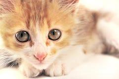 милый котенок Стоковая Фотография RF