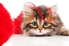 милый котенок Стоковые Изображения RF