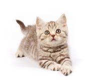 милый котенок стоковые фотографии rf