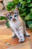 Милый котенок tortoiseshell стоковая фотография rf