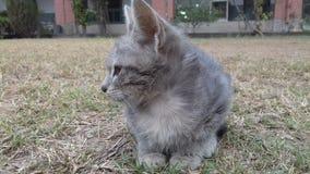 Милый кот в саде стоковая фотография rf