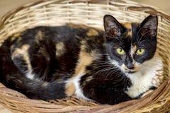 Милый кот котенка стоковая фотография