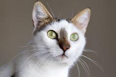 Милый кот котенка стоковые фото