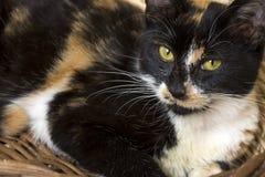 Милый кот котенка стоковая фотография rf