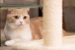 Милый кот стоковое изображение rf