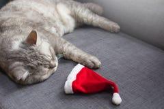 Милый кот отдыхая на софе со шляпой Санта, концепцией рождества afterparty стоковое изображение