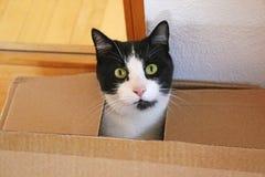 Милый кот смотря из картонной коробки стоковое изображение