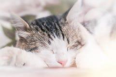 Милый кот спать, сфотографированный близко, запачканная предпосылка стоковая фотография