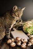 Милый кот стоя на деревенской таблице с овощами Стоковое Изображение RF