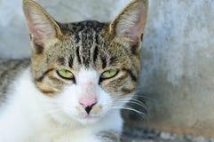 Милый кот Стоковое фото RF