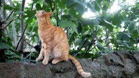 Милый кот redhead сидя на камне и смотря в камеру сток-видео