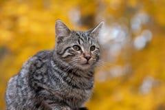 Милый кот tabby с желтой предпосылкой стоковые фотографии rf