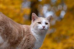 Милый кот tabby с желтой предпосылкой стоковые фото