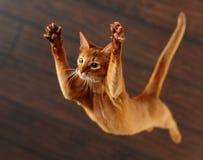 Милый красный играть кота Стоковая Фотография