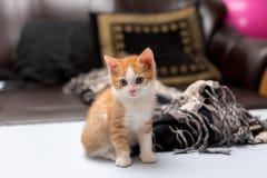 Милый красный котенок сидя на кровати стоковое фото