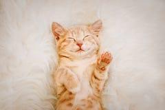 Милый, красный котенок спит на его заднем и усмехается, лапки вверх Концепция сна и доброго утра стоковое фото rf