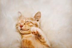 Милый, красный котенок спит на его заднем и усмехается, лапки вверх Концепция сна и доброго утра стоковая фотография rf