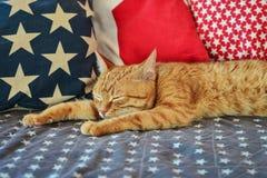 Милый красный лежать кота Стоковая Фотография