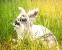 Милый кролик в траве Стоковое Фото