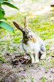 Милый кролик зайчика с гортензией в саде Стоковое Изображение