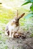 Милый кролик зайчика с гортензией в саде Стоковые Фото