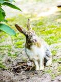 Милый кролик зайчика с гортензией в саде Стоковое Фото