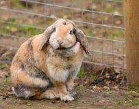Милый кролик зайчика стоковое изображение rf
