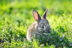 Милый кролик младенца на зеленой солнечности лужайки стоковая фотография
