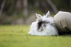 милый кролик травы поля Стоковые Изображения