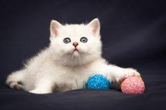 Милый маленький белый великобританский котенок с розовым носом уловил розовый шарик стоковые фотографии rf
