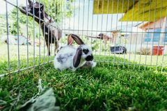 Милый маленький зайчик в на открытом воздухе смеси, зеленая трава стоковое фото rf