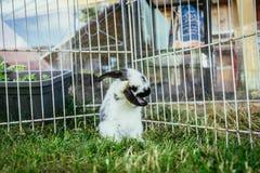 Милый маленький зайчик в на открытом воздухе смеси, зеленая трава стоковые фото
