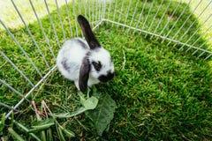 Милый маленький зайчик ест салат, на открытом воздухе смесь, зеленую траву стоковые фото