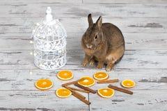 Милый маленький зайчик сидя около birdcage стоковое изображение
