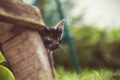 Милый маленький кот, котята внешние, играть котов смешной и красивый стоковая фотография rf