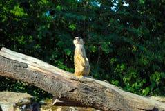 Милый маленький кот скомплектовал вверх Стоять на дереве стоковое изображение