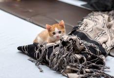 Милый маленький красный котенок пряча за одеялом стоковые изображения rf