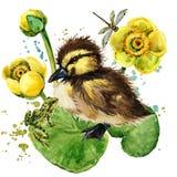 Милый маленький утенок предпосылка акварели лилии желтой воды Стоковые Фото